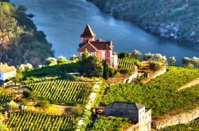 Portugal vineyard