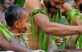 Fiji kava feature